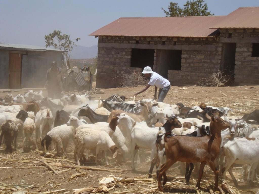 Yatta Goat Farm